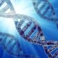 Hogyan működik a DNS?